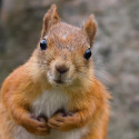 Squirrly WordPress SEO – for bloggers who don't want to go nuts